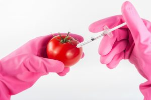 Wessel Willemsen: GMOs and What To Think of Them